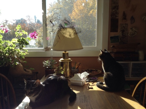 Two cats lounging in the sun in artist studio