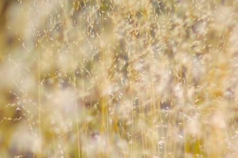 dried grass in wind