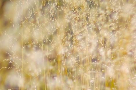 dried grass in wind