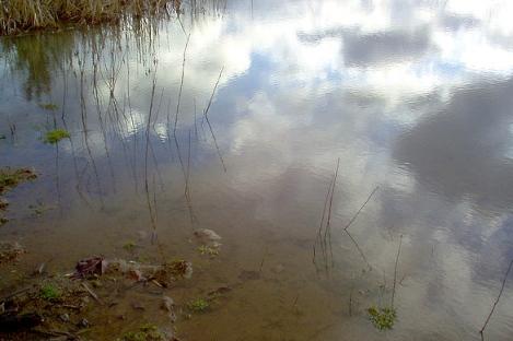 Pond mud